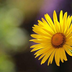 flower-2254866_1920